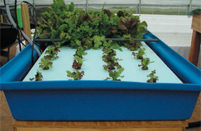 Aquaculture Polytank Trays